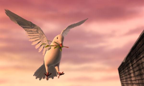 Dove Returns